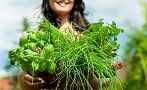 Žena, ruce, bylinky, zahrada