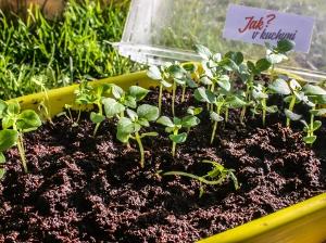 Rostoucí bylinky nahled