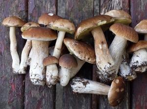 houby_nahled