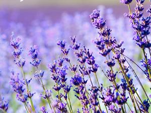 ktere bylinky by ny vasi zahradce nemely chybet