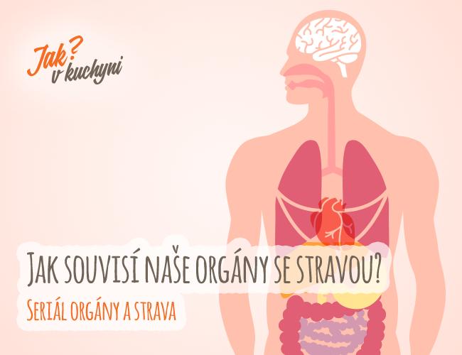 Jak souvisí naše orgány se stravou