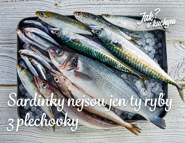 Sardinky nejsou jen ty ryby z plechovky