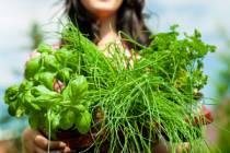 Bylinky: Zelená radost pro tělo i duši