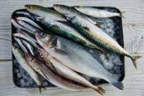 Sardinky nejsou jen ty ryby z plechovky!