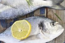 Ryby a další živočichové od nás či ze světa