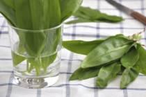 Medvědí česnek – jarní detoxikační bylinka plná vitamínů